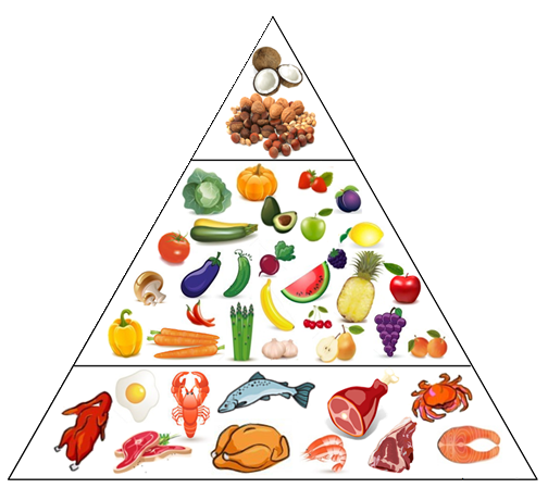 paleo diet for beginners what clip art can you add to printful wheat clipart png